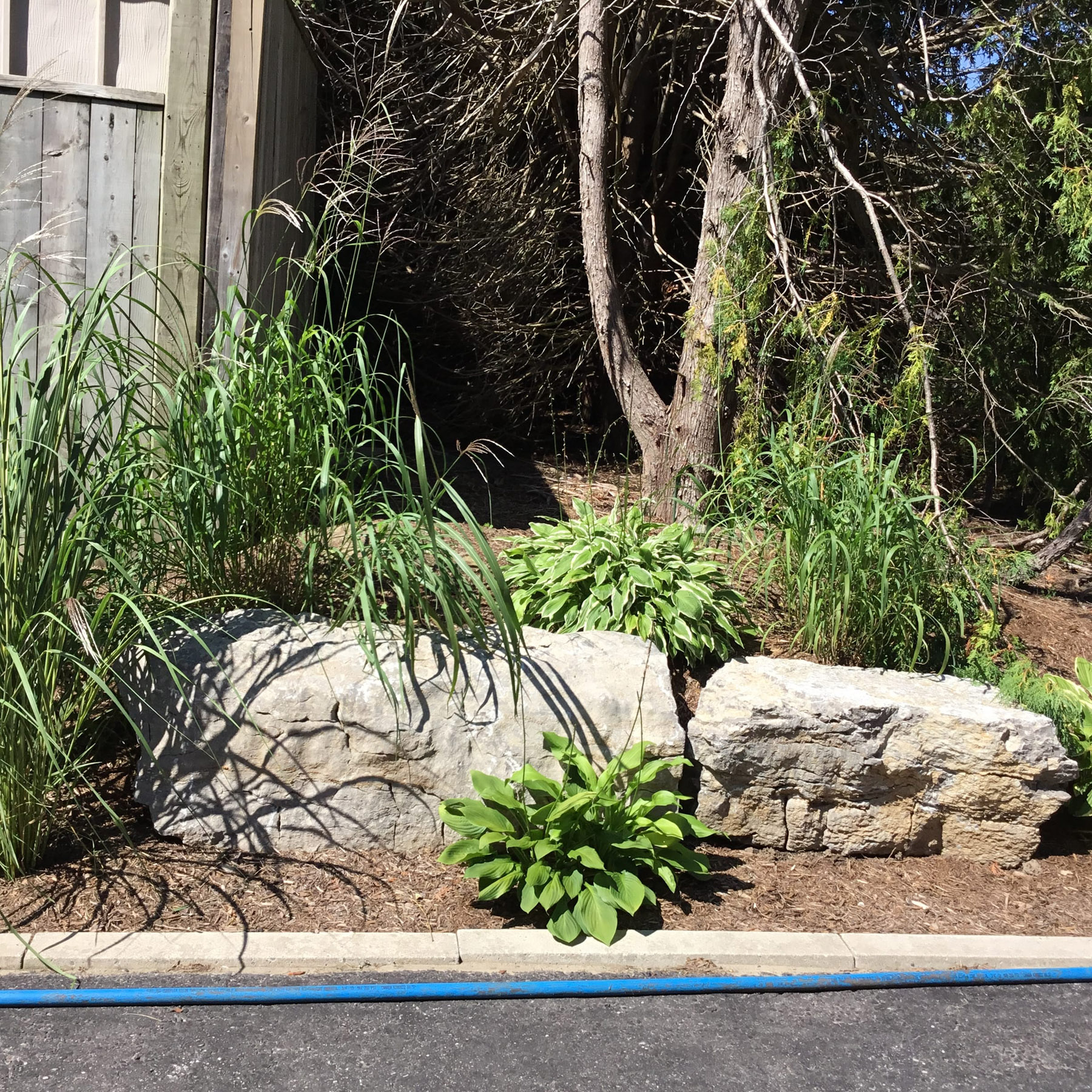 landscaping stones plants